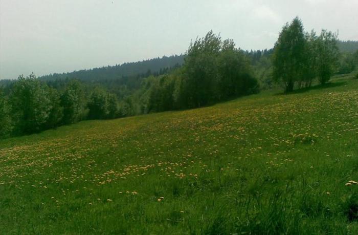 12a, bud., ogrodzona z wod- kan, prąd w granicy. Piwniczna -Kosarzyska. Tel . 506 001 108.