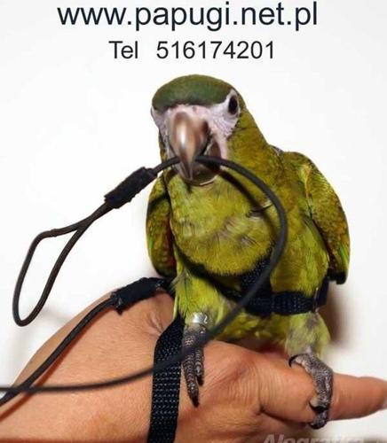 SZELKI dla papug ara, żako,amazonka, itd ,,